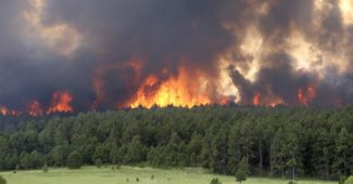black-forest-fire-2